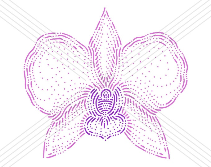 Orchid · Hand-drawn vector illustration