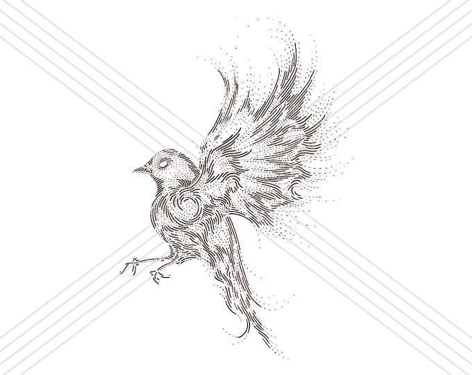 Robin #2 · Hand-drawn vector illustration