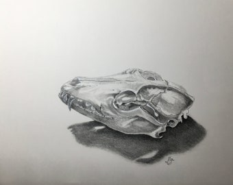 Fox skull - original signed pencil drawing - wildlife and nature art - 12cm x 18cm aperture on A4 220gm cartridge paper - unframed