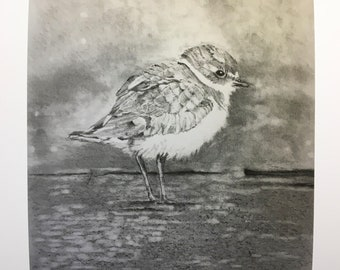 Semi-palmated Plover - A signed print of my original pencil drawing on Somerset enhanced velvet paper 255gsm