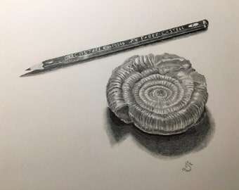 Ammonite and pencil - original and signed pencil drawing on A4 220gm cartridge paper (fossils, pencil drawing, still life)