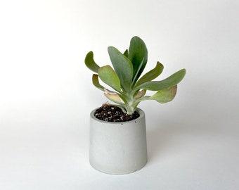 Small Circle Concrete Planter