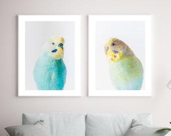 Set of 2 framed budgerigar prints, budgie wall art, parakeet print, Original Photography by Seus Ku