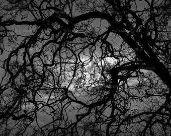 Digital Download Wall Art Photography. Tree branches silhouetted against cloudy moonlit night sky. Mystery, fear, tangle, confuse. You print