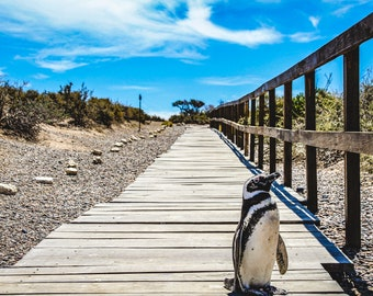 1000 piece puzzle for adults.  Penguin animal landscape photo in Argentina. South America. Gifts for men and women. Large puzzle
