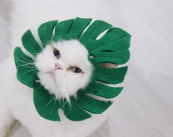 Monstera plant | Pet Costumes