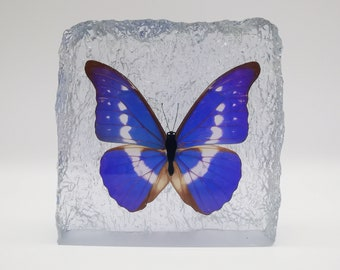 Orange Tip Deco Clock Real Butterfly In Resin
