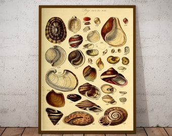Watercolour Illustration Artists Print Seashells Art Print Coastal Beach Sea Shells Poster A5 A4 or A3