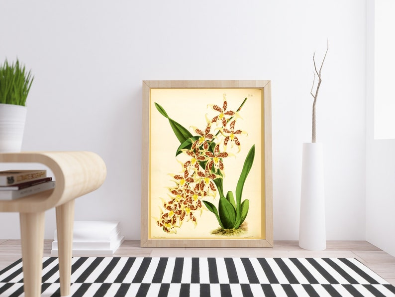 orchid poster antique book illustration leaves wall decor display plants and flowers vintage art Botanical print bedroom decoration