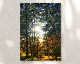 Autumnal Trees, Sunlight, Forest, Sunset, Sunrise, England, Countryside, Home Decor, Photo Art, Photography Canvas, Print, Various Sizes