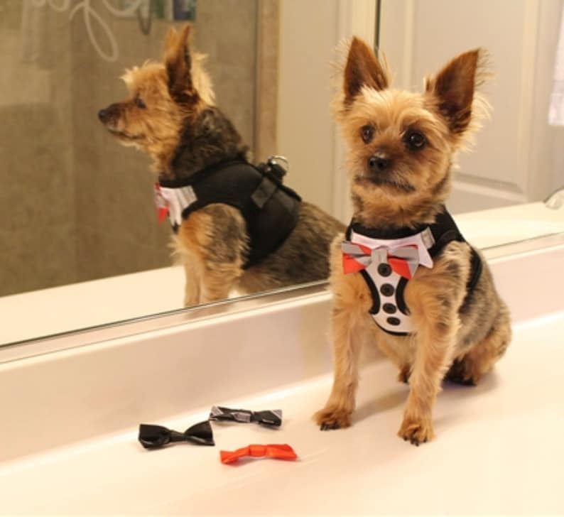 Tuxedo American River Harness with 4 bows CUSTOM Dog tuxedo harness with 4 interchangeable bows