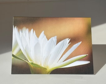 Single Water Lily Card