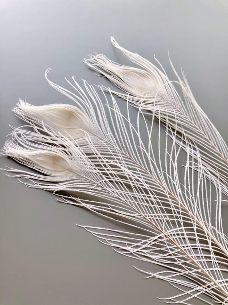 Pfauenfedern weiß