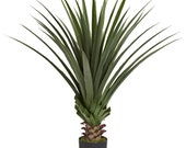 4 Spiked Agave Plant