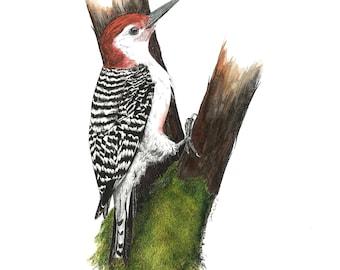 FREE SHIPPING Giclee Textured Art Print Black-necked Stilts Pen and Watercolor Handmade Drawing Unframed Bird Art Nature Art Work