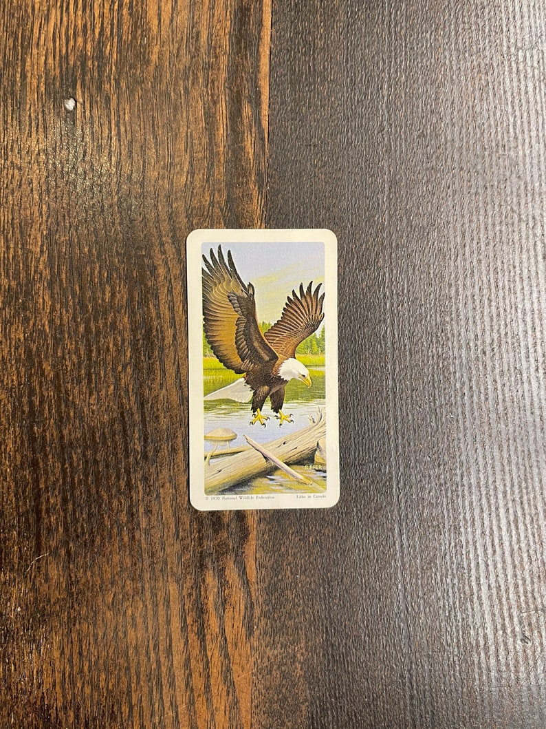 North American Wildlife in Danger #25 Bald Eagle 1970 Brooke Bond Red Rose Tea Card Series 13