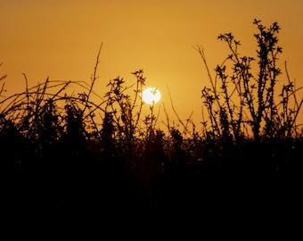 Sun through thorns