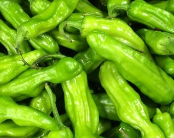 60-80 days Shishito Pepper HEIRLOOM highly prolific and super delicious!