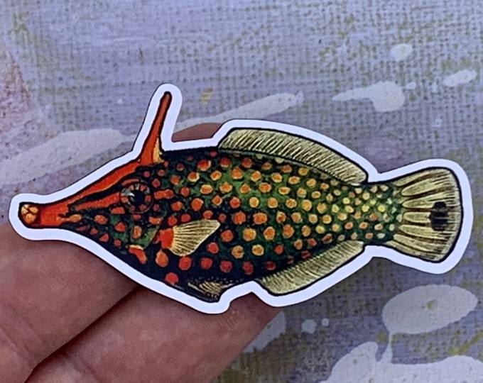 Photo of a harlequin filefish magnet in someone's hand