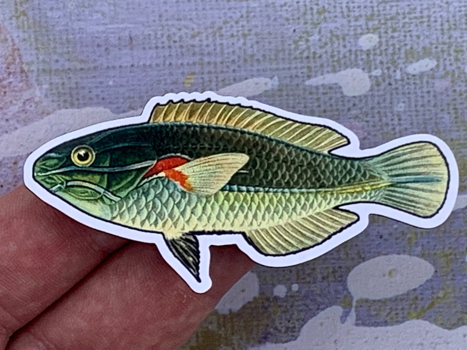 Photo of a red shoulder wrasse magnet in someone's hand (but this one is blue)