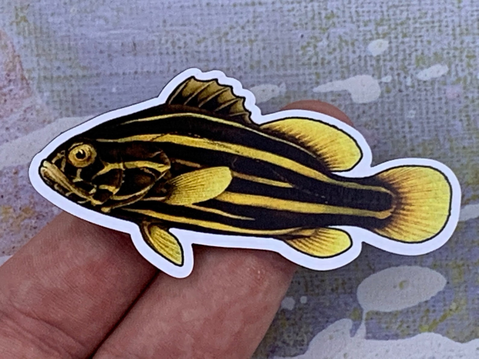 Photo of a goldenstriped soapfish magnet in someone's hand