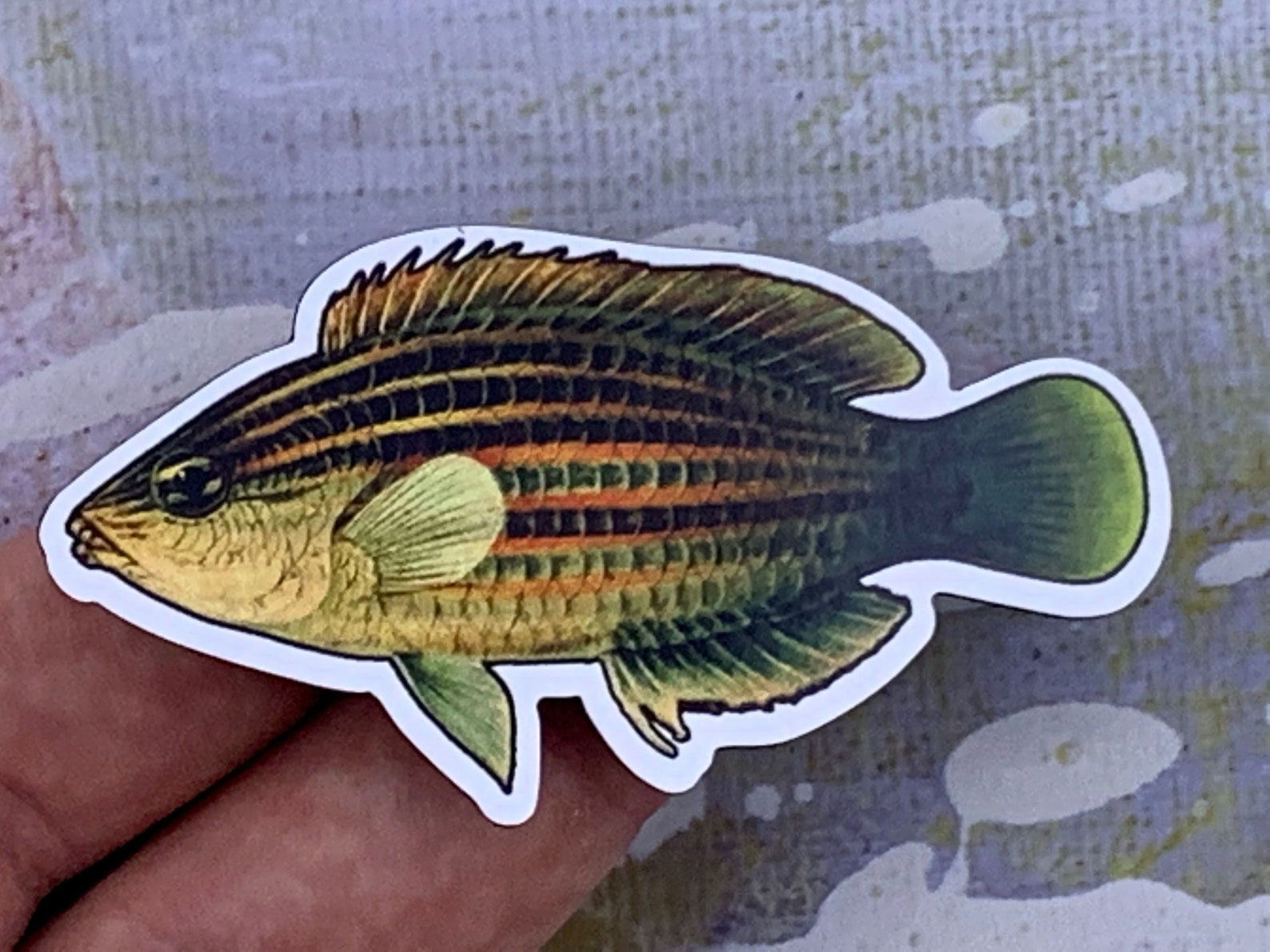 Photo of a six-line wrasse magnet in someone's hand