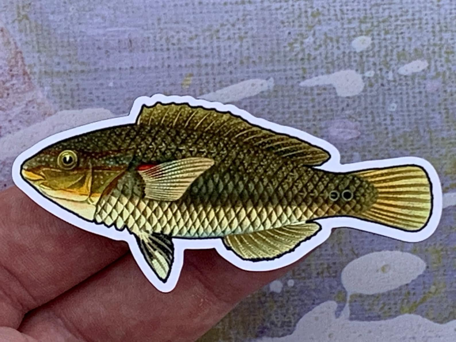 Photo of a red shoulder wrasse magnet in someone's hand (but this one is brown)