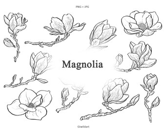Minimalist Magnolia flower clipart, Magnolia flower illustration spring png, Magnolia logo contour line drawing, Flower line art