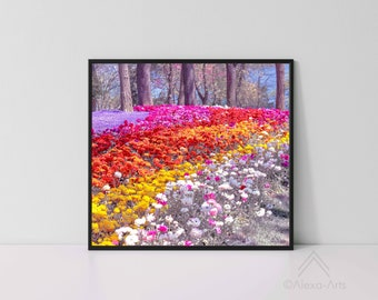 Unique Floral Wall Giclee Art Print, Park Carnations Fascination in Spectrum, Photography, Digital pencil