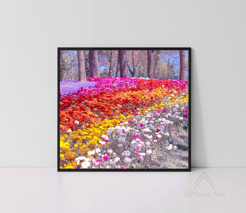 Unique Floral Wall Giclee Art Print Park Carnations image 0