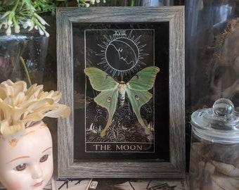 Luna moth moon tarot