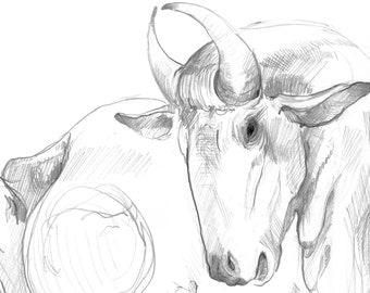 Elegant Antelope Anne Kuprat 2019
