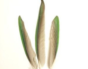 Matched Pair Solomon Eclectus Parrot 6 Wing Feathers Blue Green HL32