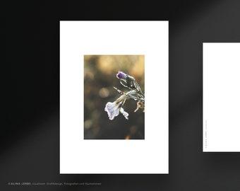 Postcard photo motif purple flowers