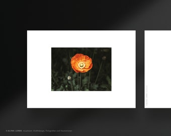 Postcard photo motif red poppy flower