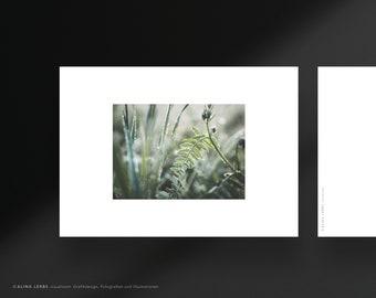 Postcard photo motif Raureif