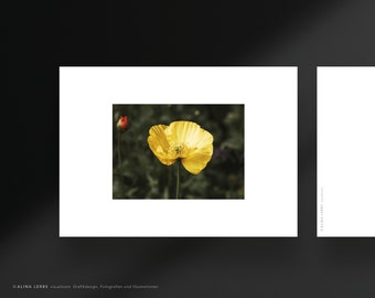 Postcard photo motif yellow poppy flower