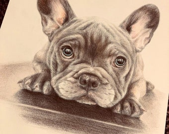 Bulldawg Up Close Last day at this SALE price Original 4 x 6 Pencil Drawing
