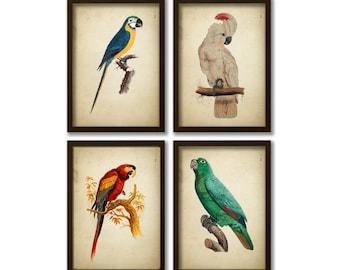 Tropical Birds Print  Parrots Poster Jungle Home decor, Nursery Wall art, Colourful Birds Vintage bird print