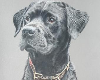 custom pet portrait commissions, realistic pet portraits, hand drawn pet portrait, Bespoke pet portrait, animal coloured pencil portrait,
