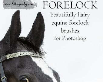 BRUSHES - Forelock brush set 1
