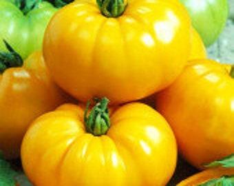 Tomato F1 Blueberry Cream Mix.Non GMO.Russian seeds