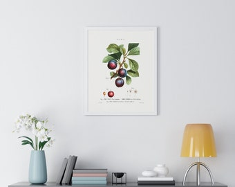 Plum (Prunus Myrobalana) Vintage Botanical Drawing Print