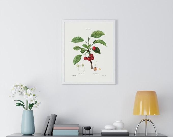 Cherry (Cerasus) Vintage Botanical Drawing Print
