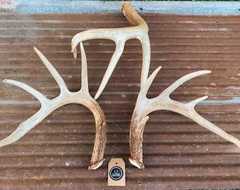 Large whole deer antler. Whole shed antler. Deer antler. Craft antler.