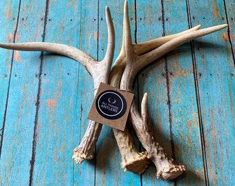 3 pack extra small deer antler. Craft grade deer antler. Whole deer antlers.