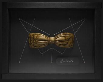 Butterfly Knot - Carlist