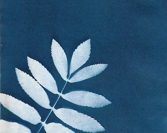 The lensless leaf, Cyanotype in A4 (21x29.7) and A5 (14.8x21) sizes
