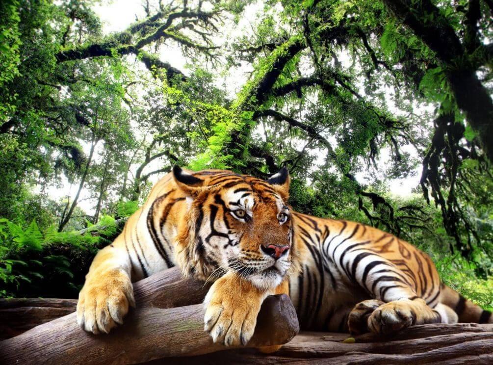Tiger Laden Deutschland