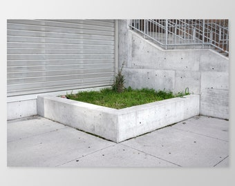 GRASS – Nature in the City, Photo Print, Urban Photography, Grass, Concrete